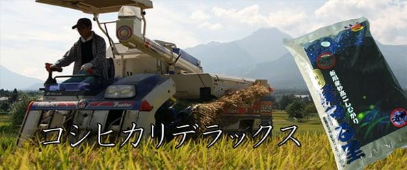 http://www.koide.gr.jp/files/libs/380/201705081947244069.jpg